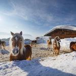 Sanfter Winter im Kaiserwinkl